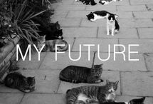 Crazy Cat Lady / by Kristen Barrett