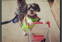 Dogs With Carts / by Fidose of Reality