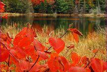 Fall / by Jen Zeller
