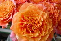 Flower Power / Lovely Flowers / by Food Junkie