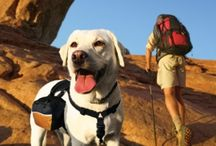 Hiking with Your Dog / Hiking is a great way to strengthen your bond with your dog (and get some exercise in).   / by TripsWithPets.com