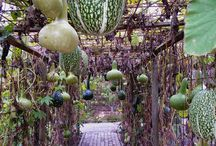 Garden Ideas / by Teresa Phillips