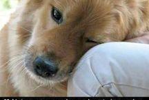 Well said that dog! / by Alfie Entlebucher