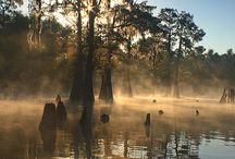 Louisiana heart❤ / I have a heart for the south / by Allison Linkous
