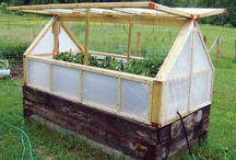 greenhouse ideas / by Wendy Finch