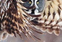 Owls / by cindy lou