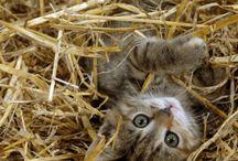 Cute Animals / by Megan Watt