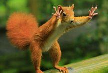 Animals / by Diane Hopkins