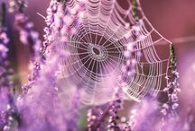 Spider Webs......... / P / by Heidi