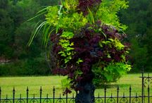 Container Inspiration / Container gardening design inspiration. / by Kat White