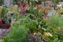 Garden / by patricia johnson