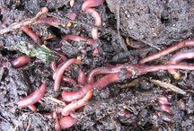 compsting w/worms / by Angie Jorgensen