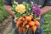 Garden of Eating! / by Irmgard Meek