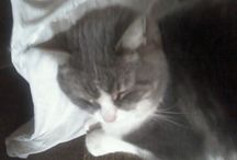 Lost Cats / Cats that have been lost in the High Desert. / by Victor Valley/High Desert Lost Pets