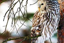 Owls / by Amanda Roman