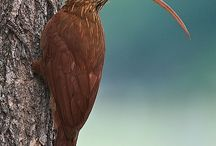 birds / by Sulman Almubark