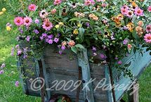 Backyard & Gardening  / by Erin Curley