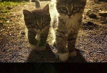 Cute Cats:) / by leah norton