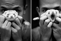Adorable Animals / by Shelby Almendarez