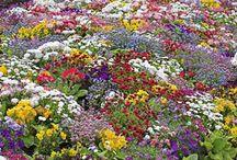 Gardens / by Kyoko Sundquist