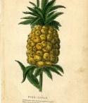 pineapple / by Ana Cristina Caldatto