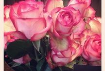 T O D A Y ' S   R O S E @---->--- / Today's pick of one of our 250+ rose varieties.  / by OnlyRoses