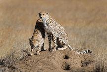 Wild Animals / by Sara Smets for Masai