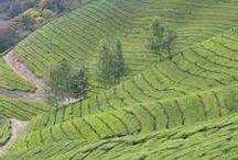 My Kerala / by Preetha Suresh