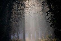paths / by Susan Bellarosa