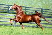 ~Equus~ / Horses / by Lynn Williams