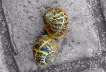 Shells / by Rebecca Varidel