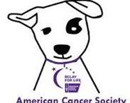 "Virtual Dog Walk / So you can't make it to your local dog walk!   Now you can participate any place, any time, at your pace during the month of September - October 18, 2014.    Make a donation of $25.00 using this link  http://main.acsevents.org/site/TR/RelayForLife/RFLCY14FL?px=14559357&pg=personal&fr_id=62373 and post a note, ""I'm participating in the Virtual Dog Walk""   Submit a photo of your dog walking. Ask friends and family to support you using same link. Top 3 fundraisers who raise over $200. win prize.  / by Dazzle Paws"