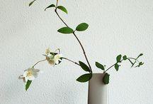 Bloemen Ikebana / by Lidy Tienhoven