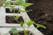 Gardening / Gardening Tips / by Karen Puleski