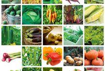 Veggies / by Belinda Alban