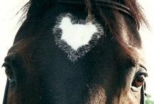 Horses / by Velvet Rider