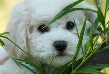 puppies / by Tana Thibert
