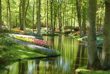 garden / by Ashley Brooks
