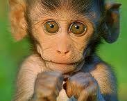 monkeys / by Linda Price