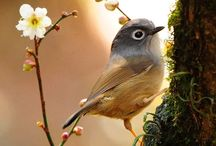 Birds / by Takeka Yoda