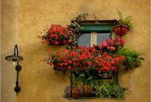 Window Landscaping / by Nancy Hugo (DesignersCirclehq.com)