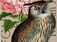 Owls Give A Hoot Owls / Whooooo Me? / by Linda McRea