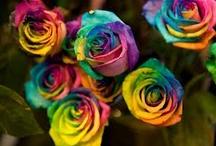 flowers / by Alissa