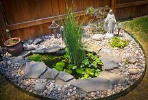 Back yard oasis / Back yard Oasis / by Patricia Calderon
