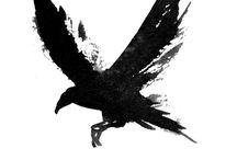 Three Ravens / by Hope Kirwan