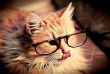 kitcats / by Tifarah Quinters