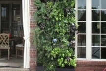 Vertical Gardening How To / An excellent source for vertical gardening ideas and solutions also organic gardening resource. http://www.squidoo.com/vertical-gardening-ideas / by Steven Barnhart