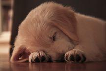 Precious Puppies / by Anna ~