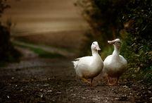 Animals / by Sarah Leah Avigdori