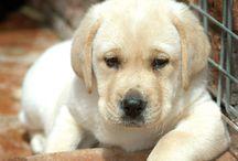 doggies :) / by Alicia Croke